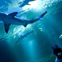 Parigi: Capodanno con gli squali